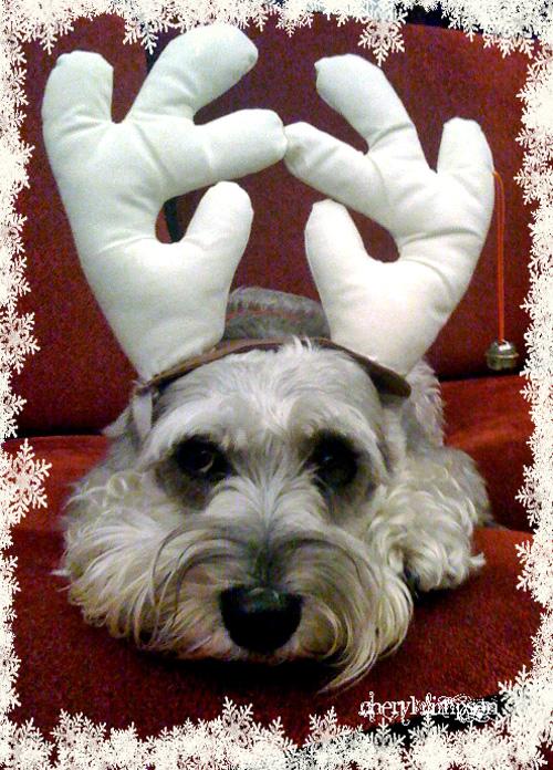 Gracie-Reindeer