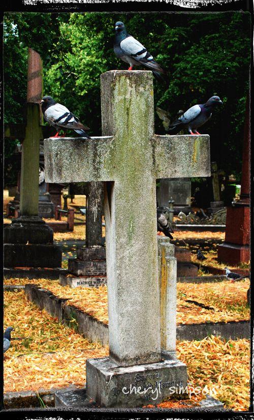 Three-Birds-on-a-Cross