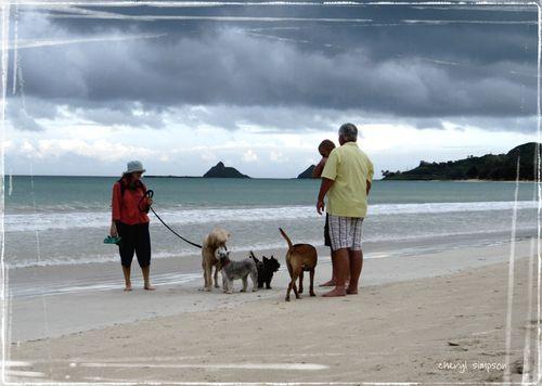Doggie-beach