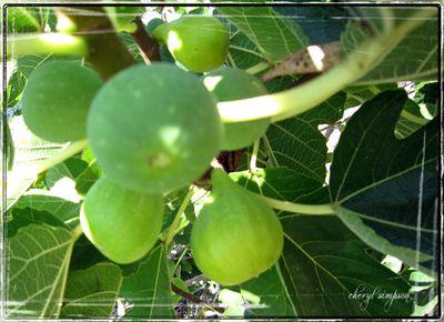 Figs-1