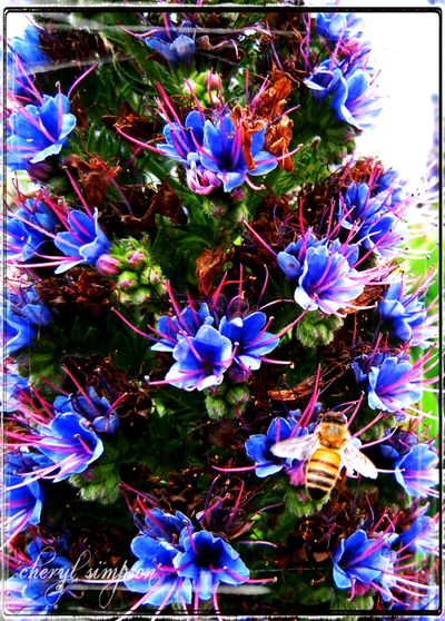 Blue-flowers-and-bee